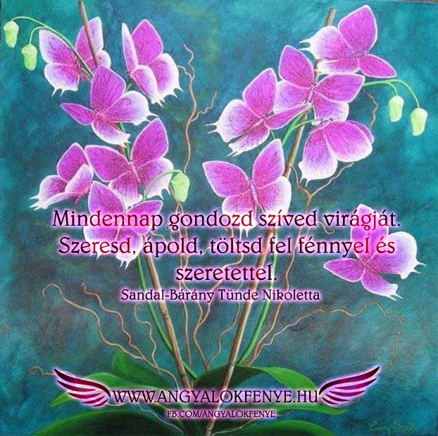 Photo of Angyali üzenet: Gondozd szíved virágját
